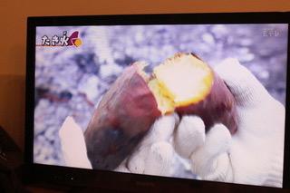 キャンプ場での焼き芋の作り方[2020.2.7]